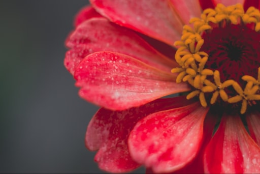10 Annual Flowers To Plant In Your Garden This Spring